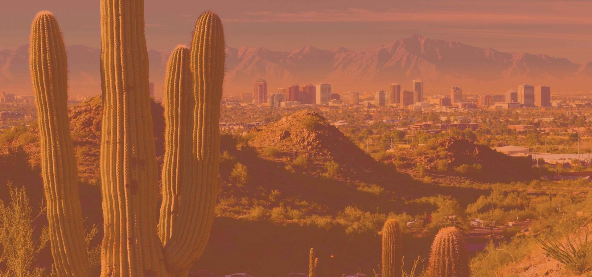 cactus with phoenix skyline in the background YMCA